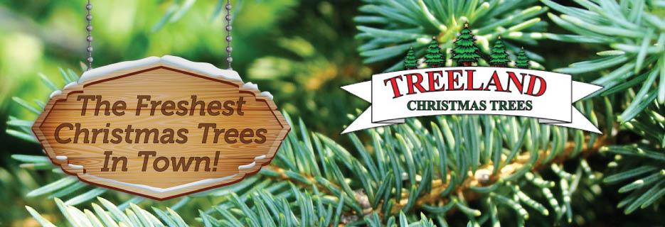 Treeland Christmas Trees