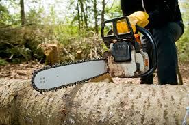 tree services; Kelly McConkey's Tree Service serving maryland, stump removal,