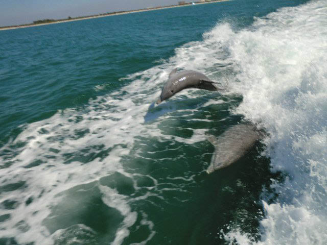 dolphin sight seeing dolphin tours kids events special event family fun