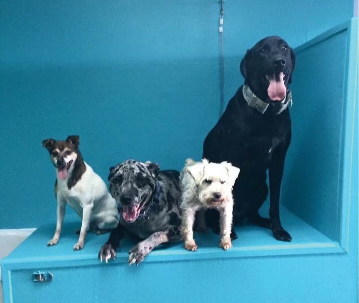 U-Wash Puppy, self service dog wash, kansas city's do-it-yourself dog wash, puppy bath, dog bath, kansas city dog wash, clean dog, clean puppy