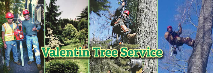 Valentin Tree Service Fairfield County CT banner