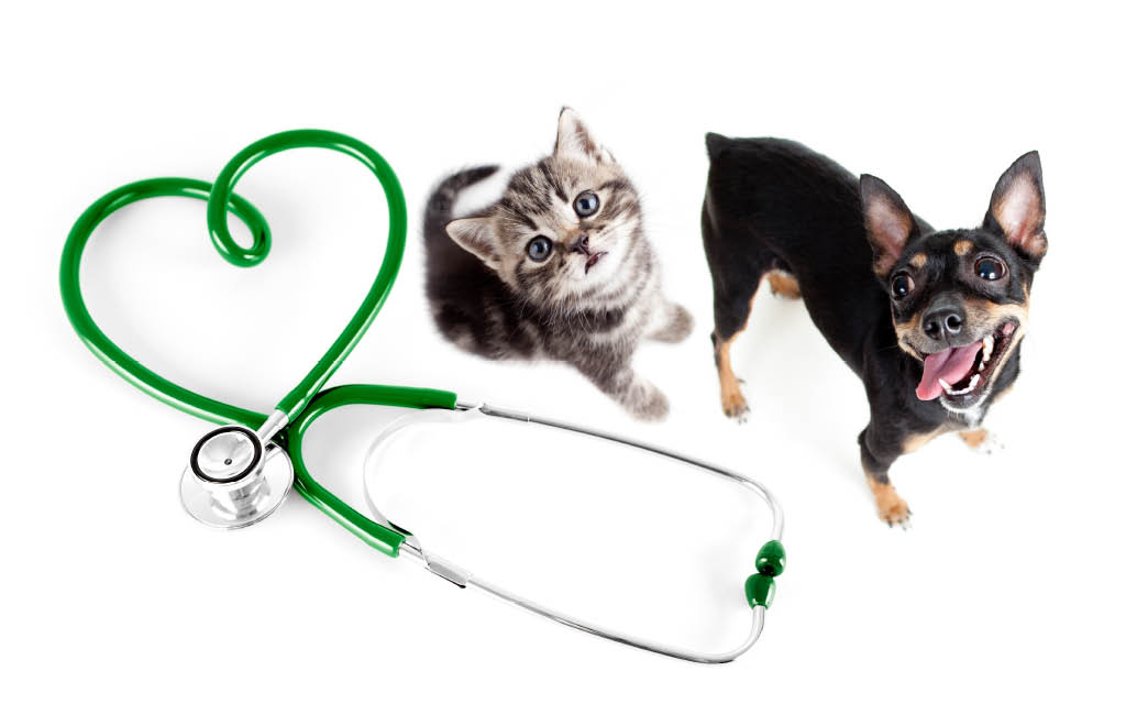 Preventive pet care services and check ups