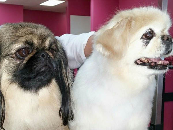 Wags and Whiskers shampoo and conditioning