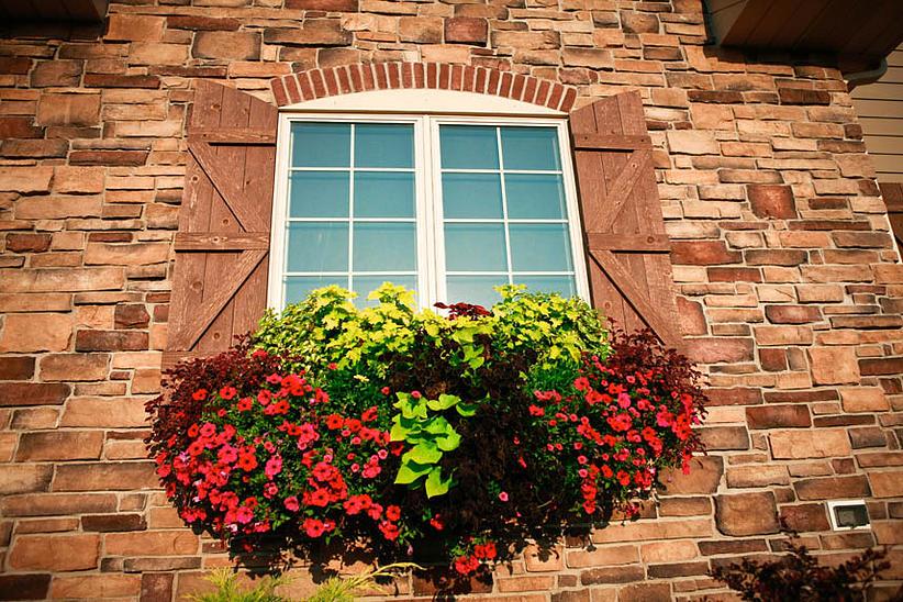 Flowers on a old window sill in Racine