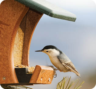 Bird houses and bird seed for sale at Wild Birds Unlimited in Vinings