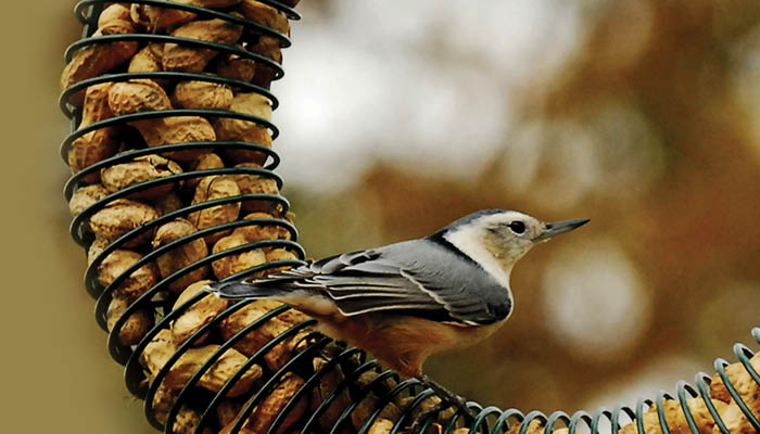 All types of bird seed and bird feed in our Vinings Wild Birds Unlimited store