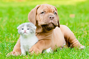 Dog lying on grass with kitten
