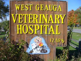 Vet Veterinarian dogs cats fish birds squirrels mountain lions turtles snakes gorillas