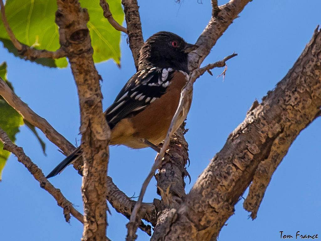 Wild Birds Unlimited Fort Collins