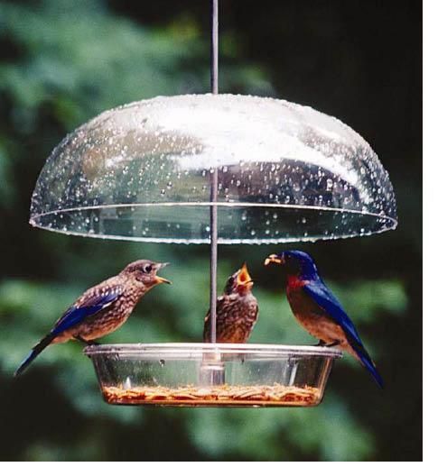 bird feeder; wild birds unlimited located in arlington, texas