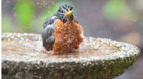 bird bath; wild birds unlimited located in arlington, texas