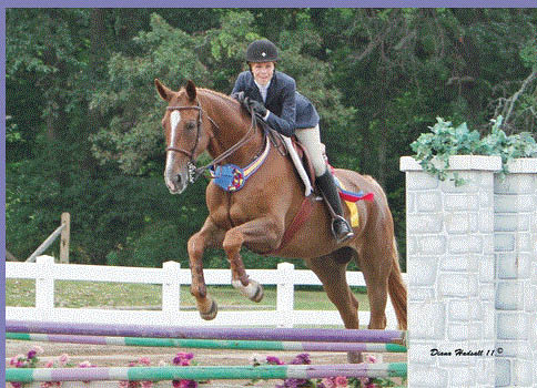 Picture of horse doing a jump at Willowbrooke Farm in Plymouth, MI