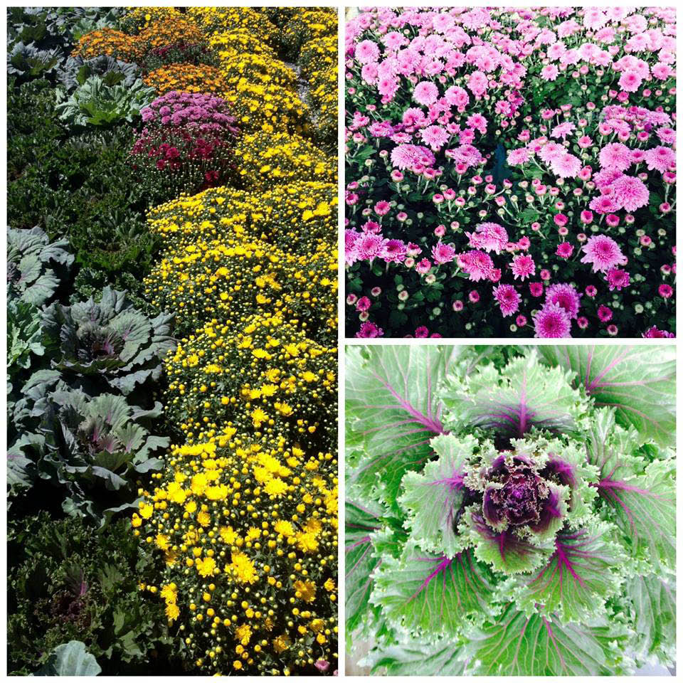 landscape, commercial, residential, flowers, herbs, fruit plants, plants, trees, shrubs; waldorf, md