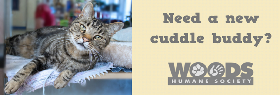 need a new cuddle buddy? woods humane society logo banner