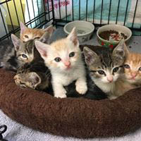Adopt a pet. Find your new best friend at Woods Humane Society!