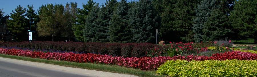 Fruit Tree and flowering plant sale in Benson, NE