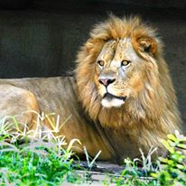Zoo Of Acadiana in BROUSSARD LA Local Coupons November 28 2017