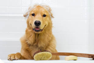 henderson coupons Soggy Dog wash pet grooming