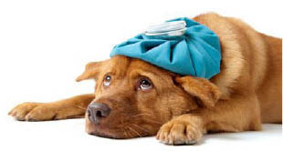 Gentle Doctor In-Home Veterinary Care, Llc